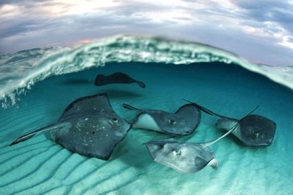 Actualité > Festival mondial de l'image sous-marine : le top des ... | Il était une fois des films | Scoop.it