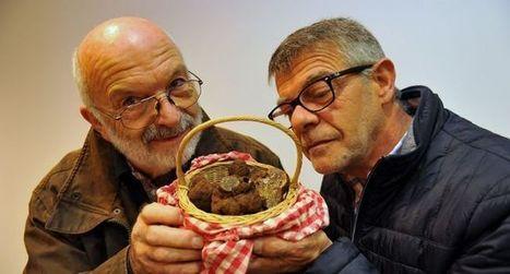 Dans le Lot, la saison des truffes démarre le 6 décembre | Actualités du tourisme lotois | Scoop.it