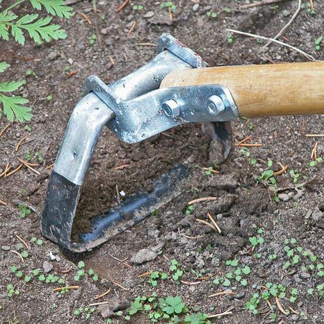 10 Biggest Vegetable Gardening Mistakes   Gardening   Scoop.it