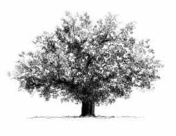 La forme de son arbre généalogique révèle le généalogiste - suite | Yvon Généalogie | L'écho d'antan | Scoop.it