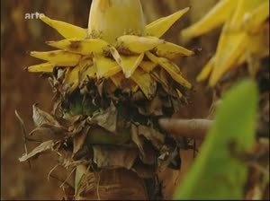Découvreur de plantes médicinales | Nemesis TV | Scoop.it