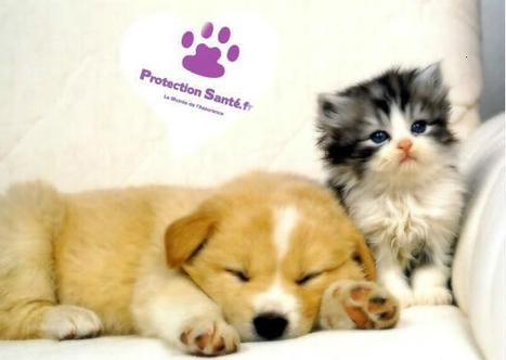 Assurance animal de compagnie - Nos services   Protection Santé   Protection Santé   Scoop.it