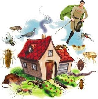 مكافحة حشرات بالرياض - ekhtsasy | 056788709 شركة تنظيف بالرياض | Scoop.it