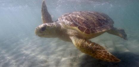 Les sacs plastiques jetables restent un fléau pour la faune d'Outremer | Ca m'interpelle... | Scoop.it