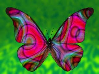 La metamorfosis | Mariposas | Scoop.it