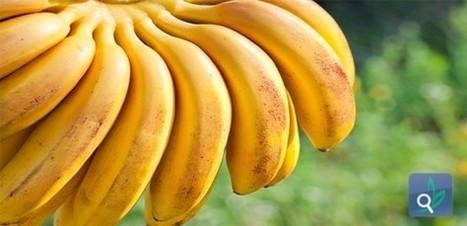 تغذية - أسرار الموز الغذائية | تغذية | Scoop.it