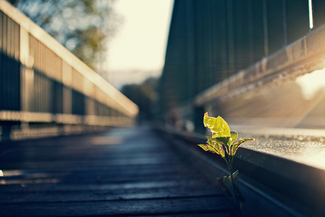 Photography Blog: Nature Photography by Jing Zhou   Photography Blog   Scoop.it
