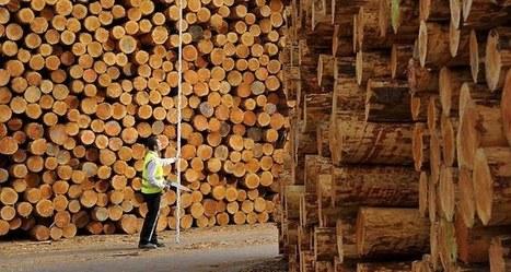 Forêt française: l'histoire d'un gâchis industriel - Les Echos | Le Fil @gricole | Scoop.it