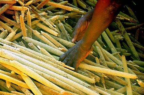 Científicos piden aumentar la inversión en agricultura y los sistemas alimentarios sostenibles para evitar hambrunas - Europa Press | Las Perspectivas Latinas | Scoop.it