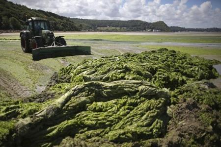 L'Etat responsable de la mort d'un cheval à cause d'algues vertes | Think outside the Box | Scoop.it