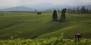 Recensement général de l'agriculture au Congo | Questions de développement ... | Scoop.it