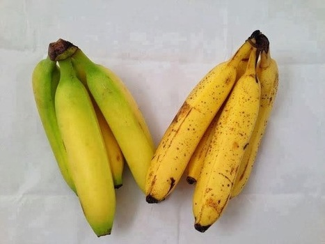 After reading this, you'll never look at a banana in the same way again | Hanson Zandi News | Scoop.it