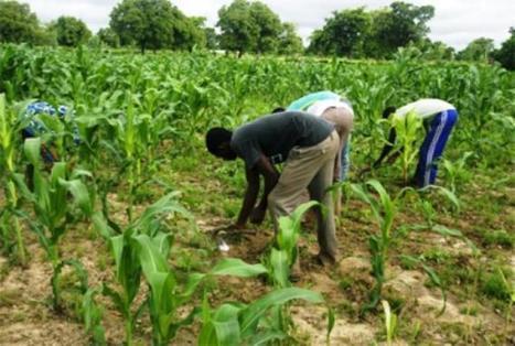 Mali : Salon du financement de l'agriculture | Questions de développement ... | Scoop.it