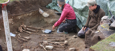 Seal diet provides clue to disappearance of Norse from Greenland | Archaeology News | Scoop.it