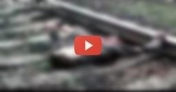 Video Socant! Un barbat taiat de tren in doua se zbate pe calea ferata!   VDroll   Scoop.it