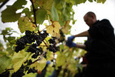 Vineyards Spread as Climate Warms, Wine Author Robinson Says | Autour du vin | Scoop.it