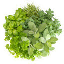 Bien marier les plantes aromatiques en pot ou au jardin | pour mon jardin | Scoop.it