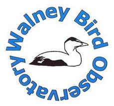 Walney Bird Observatory: Waders begin to build | Birds | Scoop.it