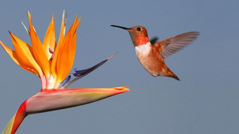 How To Optimize Your Website For Hummingbird - Firmology   SEO   Scoop.it