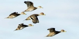 Duck Hunting Tips for Duck Hunters • /r/Hunting | Nova Scotia Hunting | Scoop.it