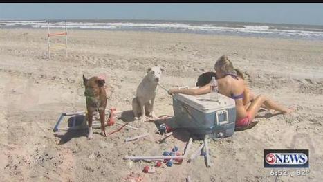 K9 Coach: Beach safety for your dog - KiiiTV.com South Texas, Corpus Christi ... - KIII TV3 | Texas Coast Real Estate | Scoop.it