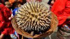 Freaky fruit: Nature's weird and exotic foods - BBC News   100 Acre Wood   Scoop.it