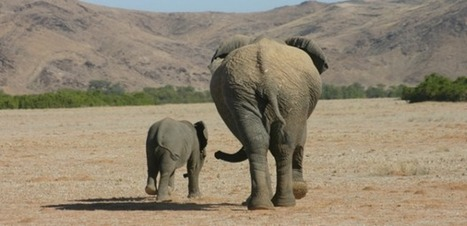 Elephant Gap Year - You'll Never Forget | Worldwide Experience | AnimalConservation | Scoop.it