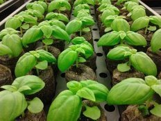 B.C. entrepreneur hopes to bring 'vertical farming' to Squamish | Food issues | Scoop.it
