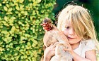 Hens make for the perfect family pet - Telegraph | Preschool | Scoop.it