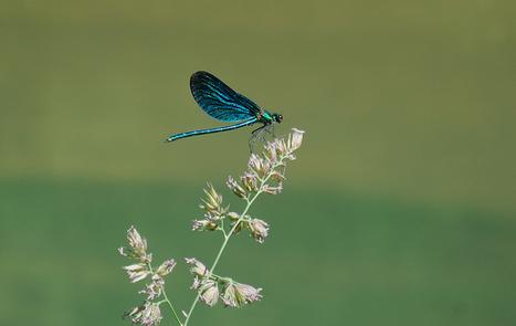 Libellule - libellule de Franche-Comté   Fauna Free Pics - Public Domain - Photos gratuites d'animaux   Scoop.it