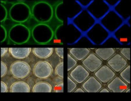 Patterned hearts: Bioengineers create rubber-like material bearing micropatterns for stronger, more elastic hearts | Cybofree : Techno Social Issues for a Postmodern Transhuman Society | Scoop.it