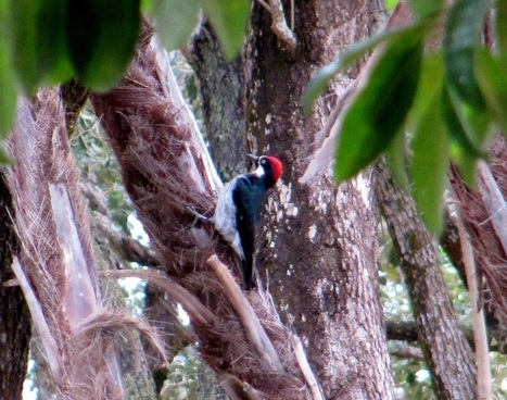Birds of Stann Creek District | Belize in Social Media | Scoop.it