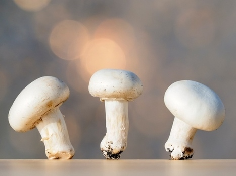 Gene-edited CRISPR-Cas9 mushroom escapes US regulation | Amazing Science | Scoop.it