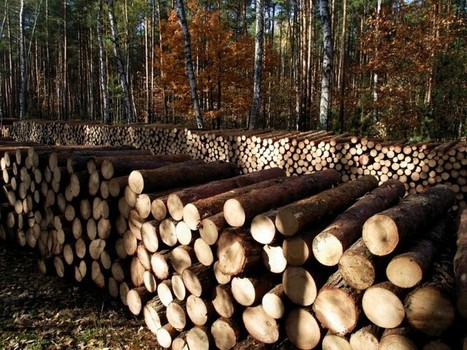 Forest and timberland markets ripe for investment | Timberland Investment | Scoop.it