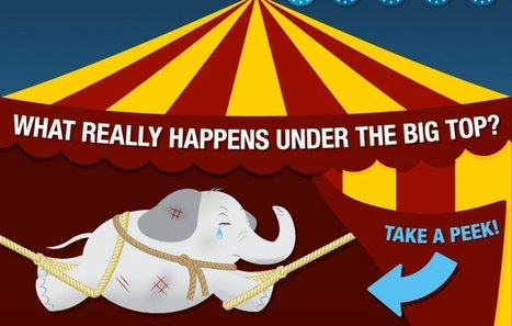 What REALLY Happens Under the Big Top: Why Circuses Shout Be Banned Immediately | GarryRogers Biosphere News | Scoop.it
