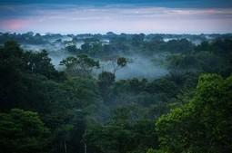 Gambar Hutan Amazon Yang Indah Nan Cantik   Pemanasan Global   Scoop.it