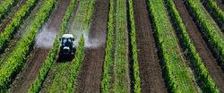Le lymphome non hodgkinien officiellement lié aux pesticides - Journal de l'environnement | Chimie verte et agroécologie | Scoop.it