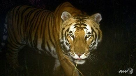 Tigers and villagers live peacefully in Sumatran hamlet | GarryRogers NatCon News | Scoop.it