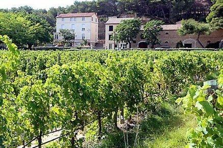 Les premiers vins issus de cépages résistants | Le Vin et + encore | Scoop.it