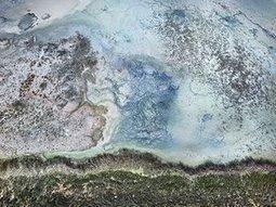 Edward Burtynsky on his ravaged Earth shots: 'We've reached peak everything' | Lorraine's Environmental Change &  Management | Scoop.it