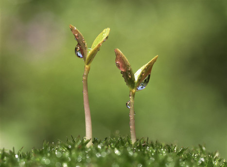 The Growth Obsession – And Why Social Enterprises and Funders Need To Snap Out of It | Sustainable Futures | Scoop.it