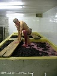 Organisé prochainement à Condrieu: la région Rhône-Alpes a désormais son salon des vins bio | Tourisme en pays viennois | Scoop.it