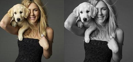 Marley et moi, bientôt une série TV ? | Fashion Pets | Scoop.it