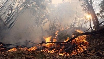 Incendios recientes, el efecto de los recortes - Diario digital Nueva Tribuna | Incendios forestales | Scoop.it