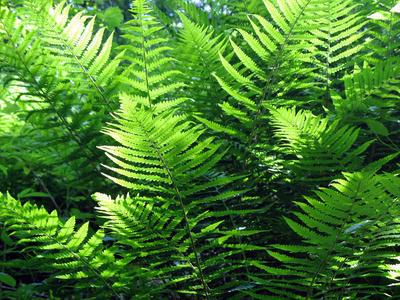 New light shone on photosynthesis | javierar | Scoop.it