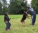 Une fille de 5 ans protégée par un berger allemand | CaniCatNews-actualité | Scoop.it
