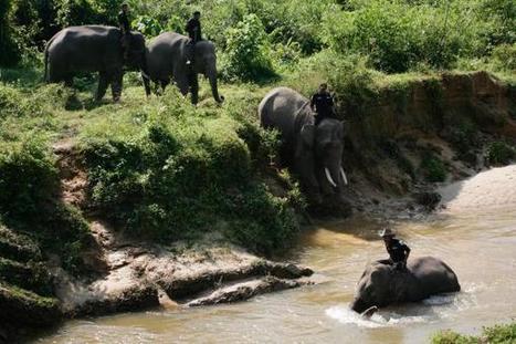 Indonésie: des «éco-guerriers» protègent forêts et espèces en danger   J'écris mon premier roman   Scoop.it