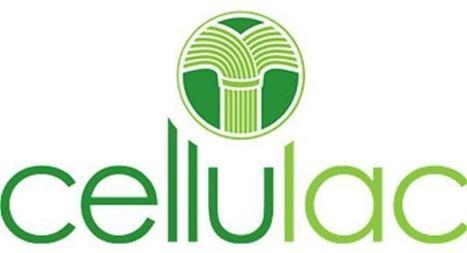 Cellulac creează 30 locuri de muncă în Dundalk | Români în Irlanda | Scoop.it
