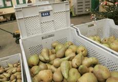 Forcer le don des aliments invendus | Souveraineté Alimentaire | Scoop.it