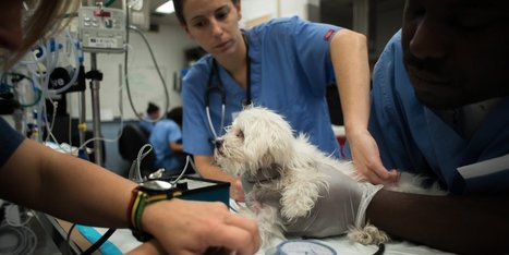 Inside the advanced animal hospital where pets receive treatments not even available to humans | The Future of Wellness & Healthcare | Scoop.it